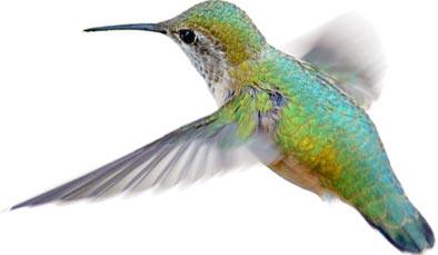 Talk To Me: Google's Hummingbird Update