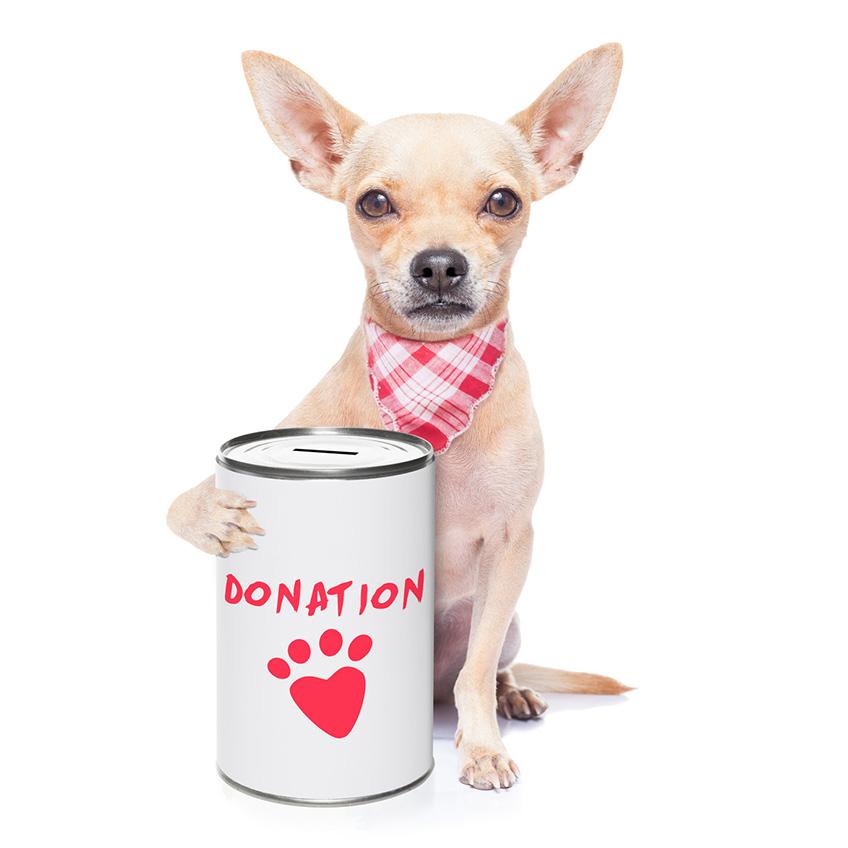 dog-donation-jar