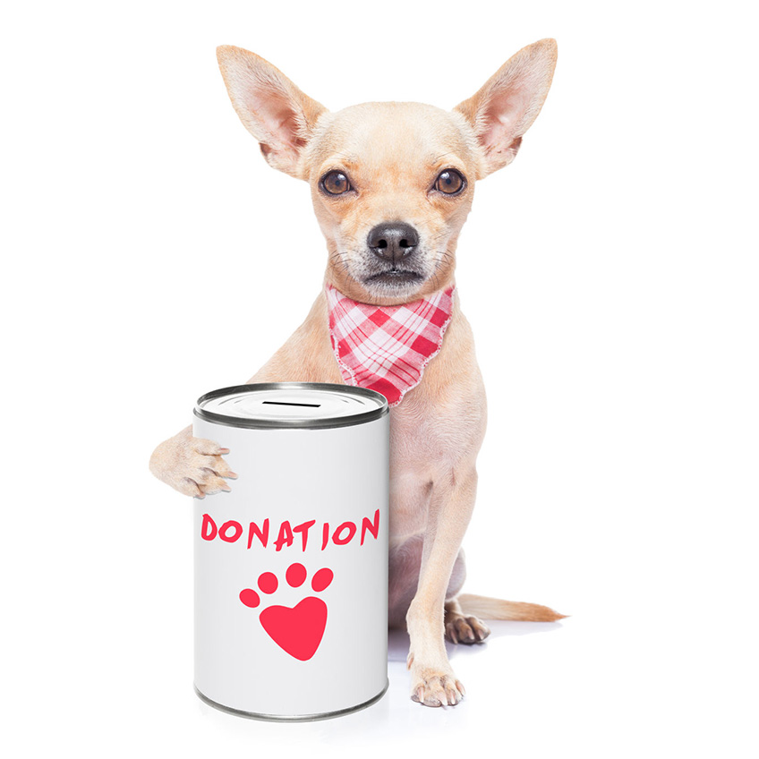 dog-donation-jar